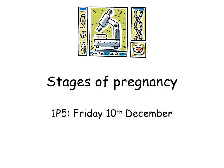 Stages of pregnancy 1P5: Friday 10 th  December
