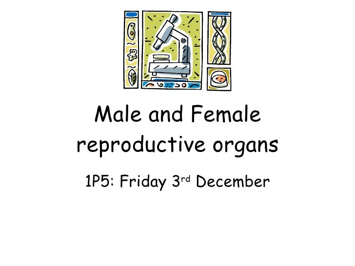 Male and Female reproductive organs 1P5: Friday 3 rd  December