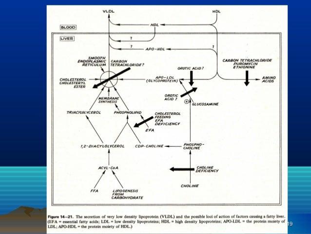 Pengaruh_Polifenol_Buah_Tin_terhadap_Pem.pdf