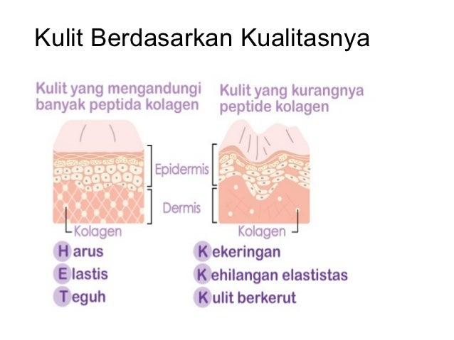 Susunan kulit manusia