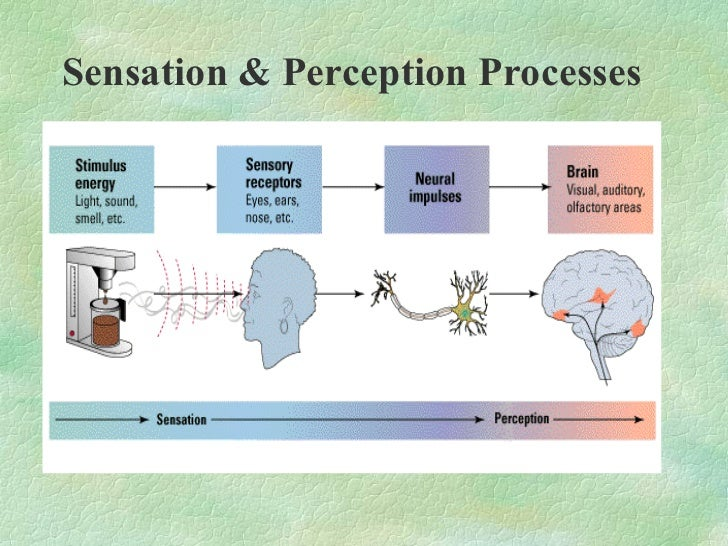 perception process Perception refers to the set of processes we use to make sense of all the stimuli  you encounter every second, from the glow of the computer screen in front of you .