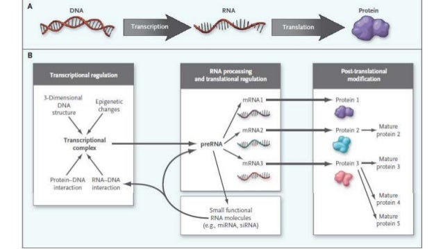 pharmocogenomics and genetics in relation with molecular therapeutics and diagnosis Slide 2