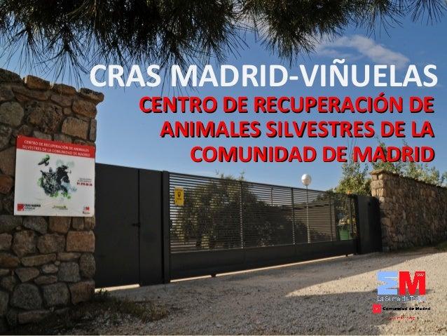 CRAS MADRID-VIÑUELAS CENTRO DE RECUPERACIÓN DECENTRO DE RECUPERACIÓN DE ANIMALES SILVESTRES DE LAANIMALES SILVESTRES DE LA...