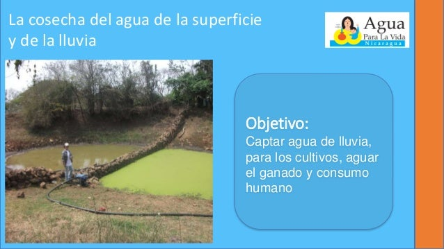 Reservorios para agricultura familiar for Peces de agua fria para consumo humano