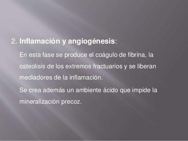 3. Formación del callo de fractura: Depende de la tensión de oxígeno En la zona central, con baja tensión de oxígeno, se f...