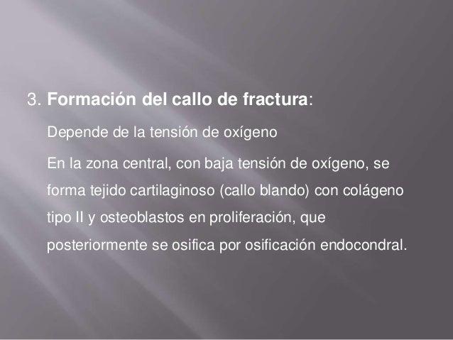 4. Osificación del callo de fractura: A las 2 semanas de la fractura, los condrocitos dejan de proliferar y predominan los...