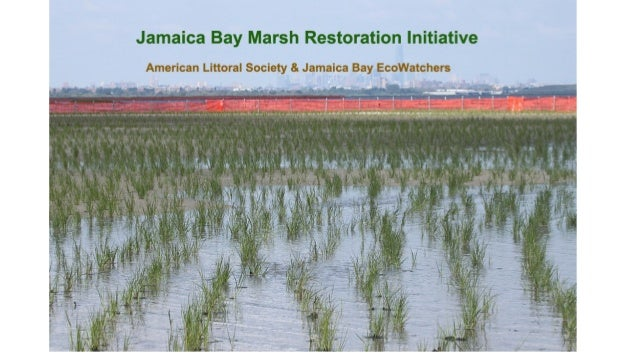  1,400 acres of tidal wetlands loss in Jamaica Bay since 1924  Marsh deterioration continues at a rate of over 44 acres ...