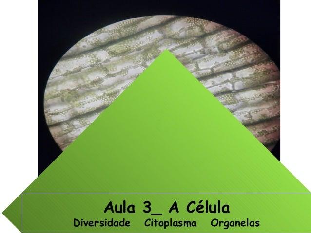 Aula 3_ A Célula Diversidade Citoplasma Organelas