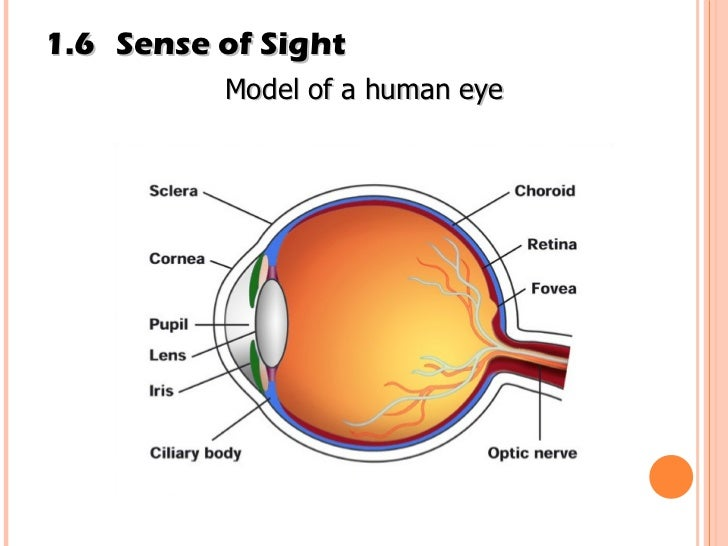 limitations to the sight and hearing Both sight and sound have limitations as one gets older the ability to see and hear can diminish depending on what the person has been exposed to.