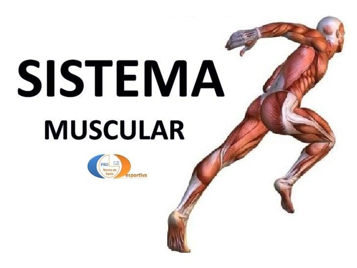 Estudo do movimento                               Corpo Humano – Tipos de TecidosTipos de tecido   Principais funções dos ...