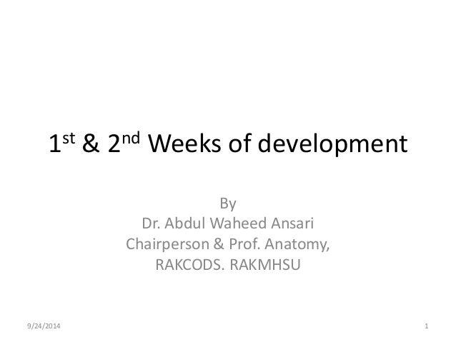1st & 2nd Weeks of development  By  Dr. Abdul Waheed Ansari  Chairperson & Prof. Anatomy,  RAKCODS. RAKMHSU  9/24/2014 1