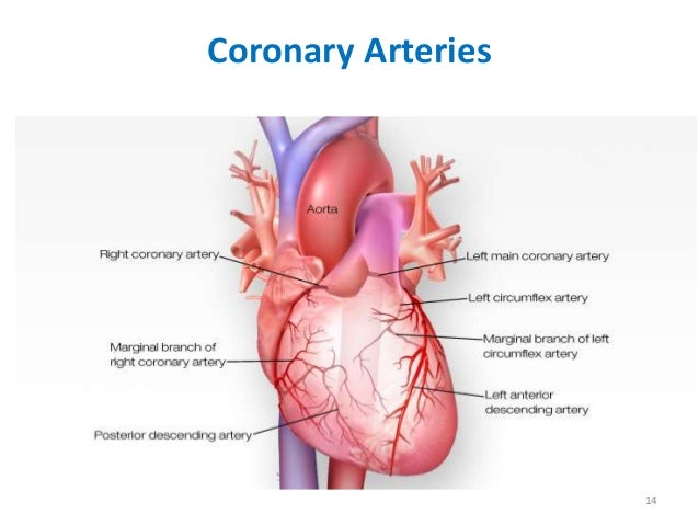 Chest pain differential diagnosis coronary arteries 14 ccuart Gallery