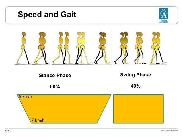 Speed and Gait  Stance Phase  Swing Phase  60%  40%  5 km/h  7 km/h 8/23/12