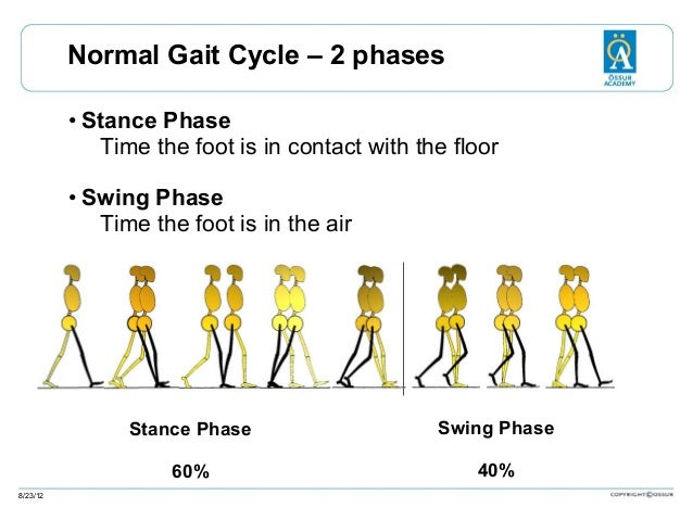 Normal Gait Cycle – 2 phases • Stance Phase Time the foot is in contact with the floor • Swing Phase Time the foot is in t...