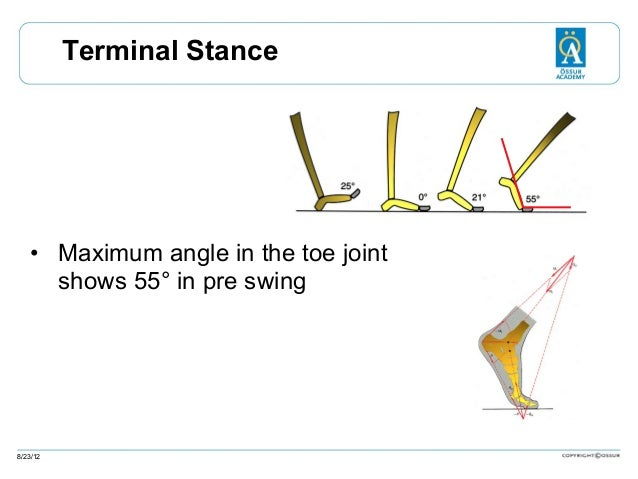 Terminal Stance  • Maximum angle in the toe joint shows 55° in pre swing  8/23/12