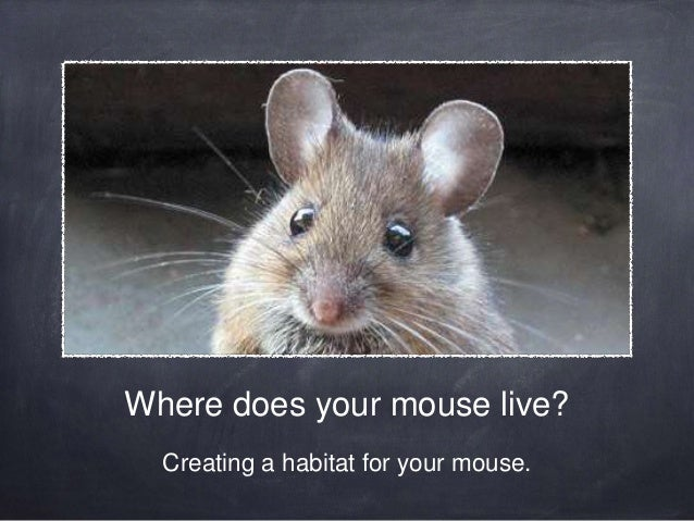 Where does your mouse live? Creating a habitat for your mouse.