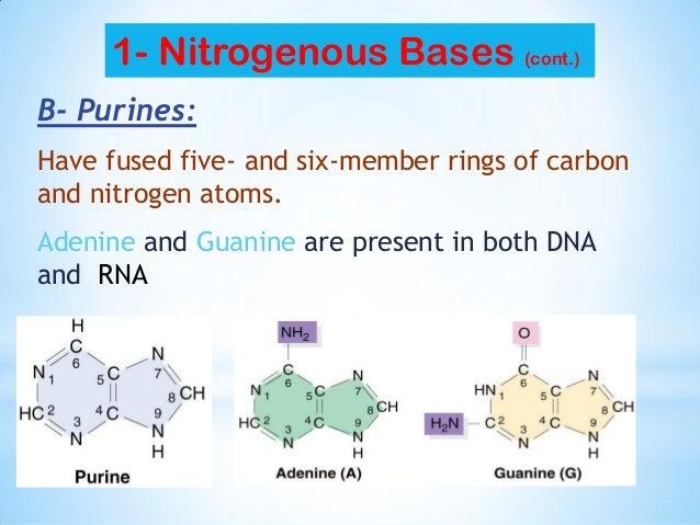 Member Nitrogen Rings