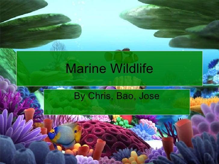 By Chris, Bao, Jose Marine Wildlife