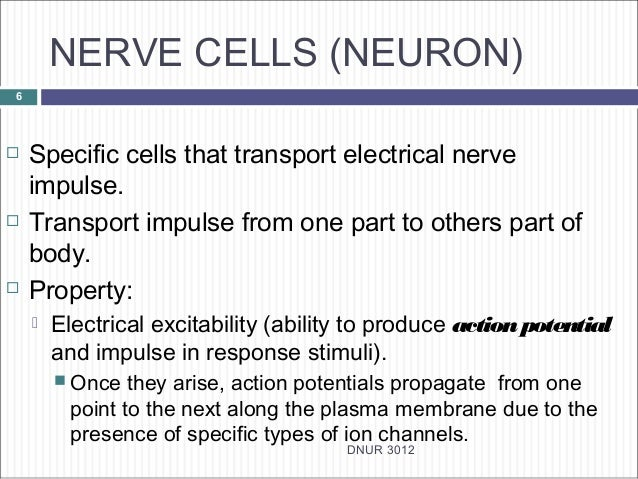 1 structure functions nerve cells