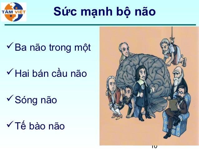 Sức mạnh bộ não Ba não trong một Hai bán cầu não Sóng não Tế bào não                        10