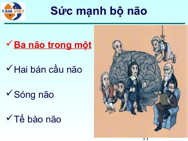 Sức mạnh bộ não Ba não trong một Hai bán cầu não Sóng não Tế bào não                       11