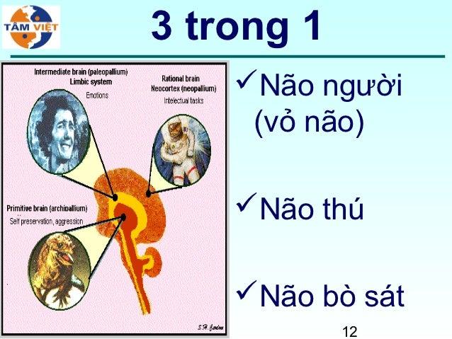 3 trong 1    Não người     (vỏ não)    Não thú    Não bò sát            12