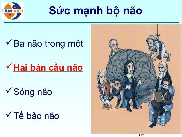 Sức mạnh bộ não Ba não trong một Hai bán cầu não Sóng não Tế bào não                        19