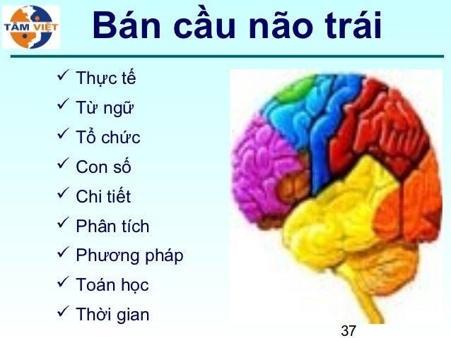 Bán cầu não trái Thực tế Từ ngữ Tổ chức Con số Chi tiết Phân tích Phương pháp Toán học Thời gian                 37