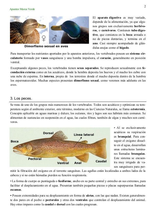 1 tema 10_vertebrados Slide 2