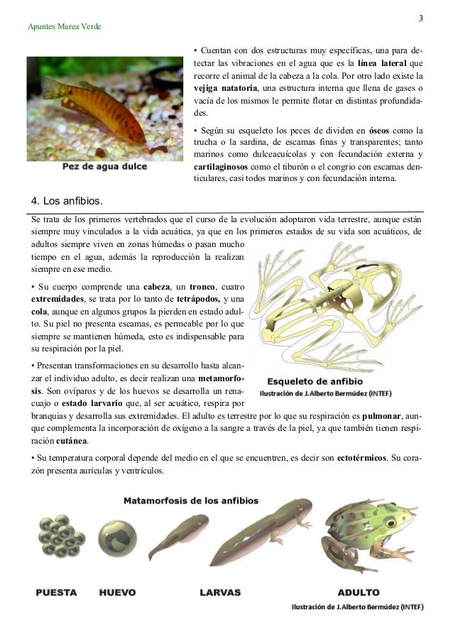 1 tema 10_vertebrados Slide 3