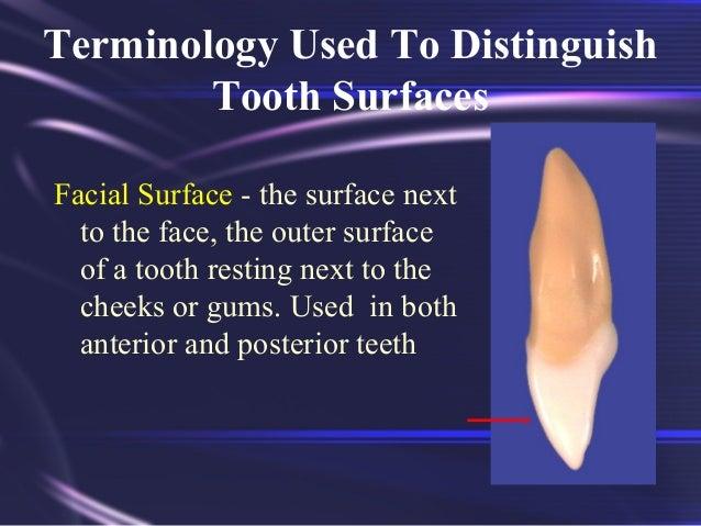 Tooth Morphology Basics