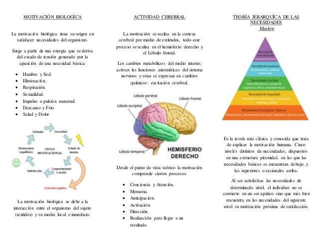 Tríptico Enfoque Biológico De La Motivación