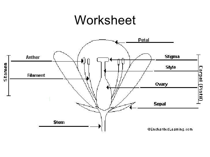 Types of asexual reproduction worksheets