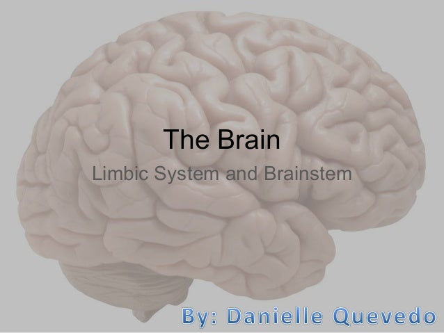 The Brain Limbic System and Brainstem