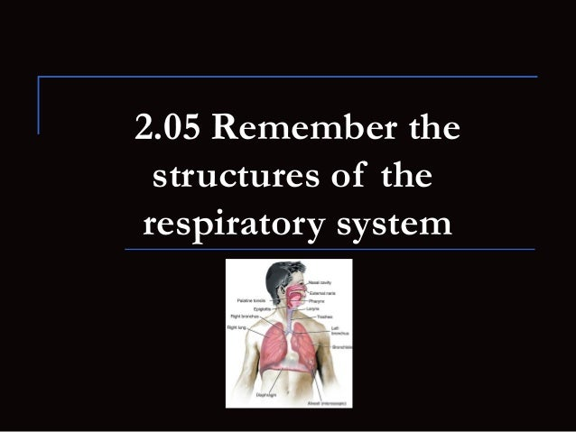 2.05 Remember the structures of therespiratory system