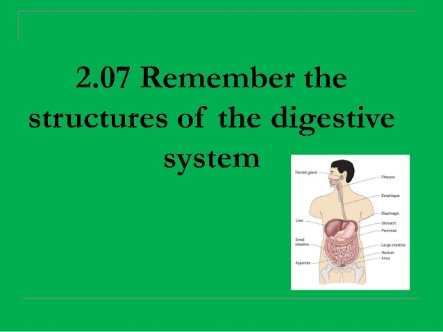 Essential Question  What are the structures of the       digestive system?          2.07 Remember the structures of the   ...