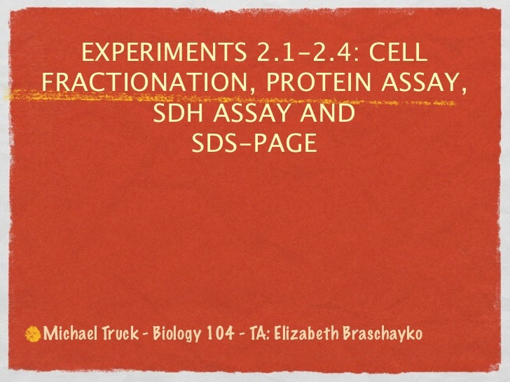 EXPERIMENTS 2.1-2.4: CELLFRACTIONATION, PROTEIN ASSAY,        SDH ASSAY AND          SDS-PAGEMichael Truck - Biology 104 -...