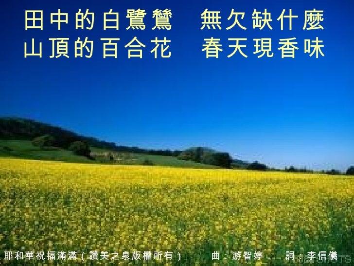 田中的白鷺鷥   無欠缺什麼 山頂的百合花 春天現香味
