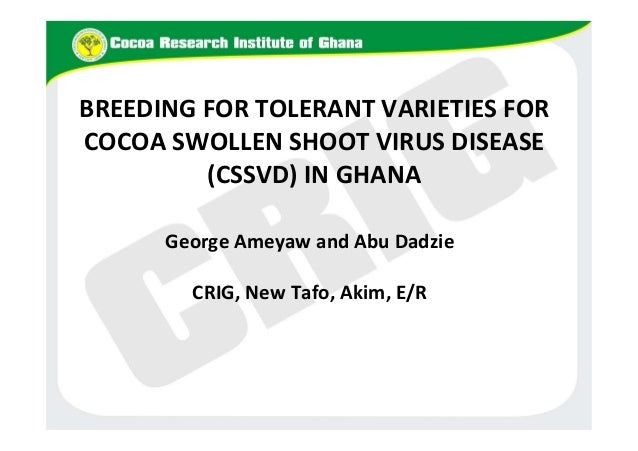 BREEDING FOR TOLERANT VARIETIES FOR COCOA SWOLLEN SHOOT VIRUS DISEASE (CSSVD) IN GHANA George Ameyaw and Abu Dadzie CRIG, ...
