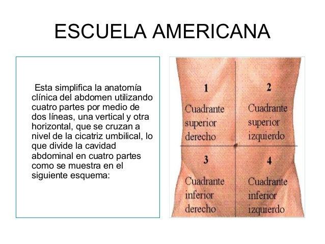 2. anatomia quirurgica de abdomen