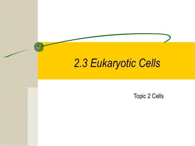 2.3 Eukaryotic Cells Topic 2 Cells