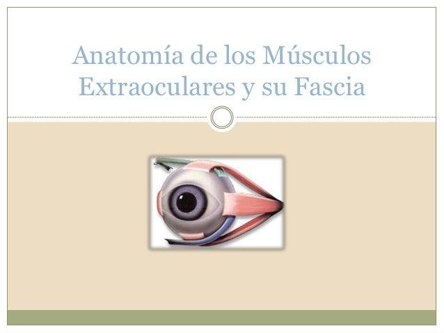 Anatomía de los Músculos Extraoculares y su Fascia