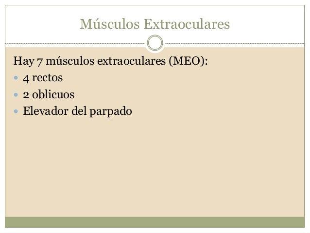 2. anatomía de los músculos extraoculares y su fascia