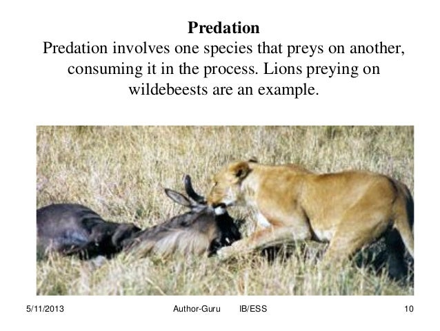 example of predation relationship