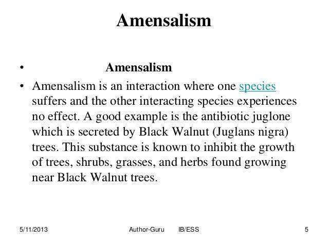 amensalism examples