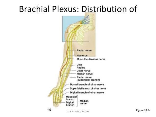 2. neuropathies, Skeleton