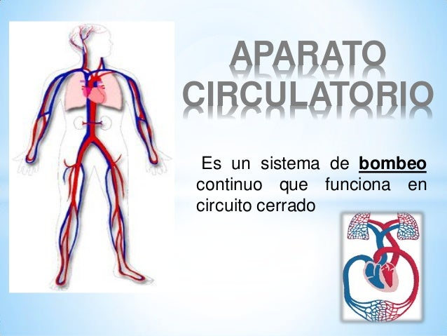APARATO CIRCULATORIO Es un sistema de bombeo continuo que funciona en circuito cerrado