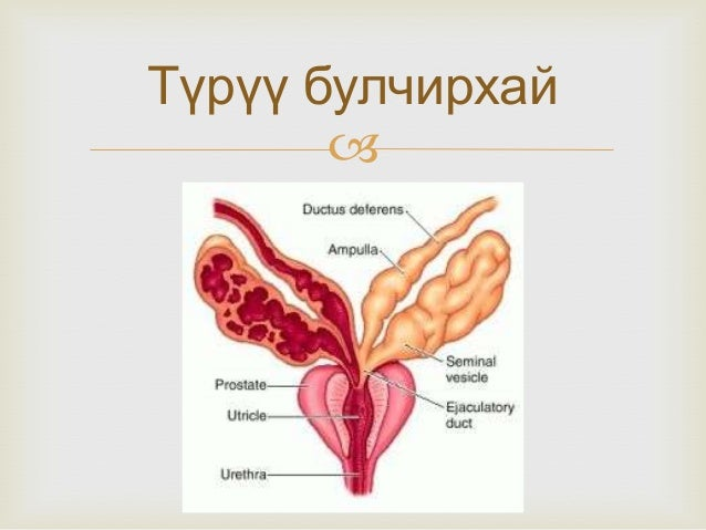 Эмэгтэй хүний нөхөн үржихүйн эрхтэн  