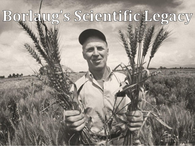 Norman Borlaug's Scientific Legacies in Wheat