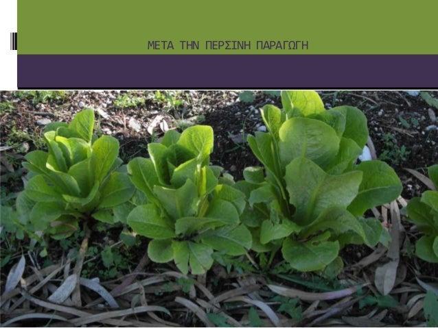 Σχολικός λαχανόκηπος Slide 2